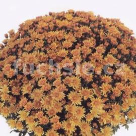 Chryzantéma Multiflora oranžová