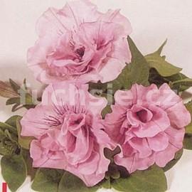Surfinie růžová