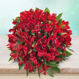 Alstromérie x Lilie Inků červená
